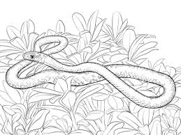 Viper Snake Coloring Pages