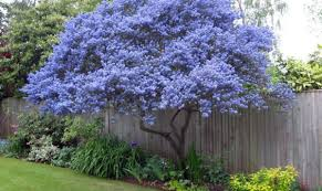 1000 Ideas About Backyard Trees Best Shade Trees   Unique Landscape Best Shade Trees For Oregon Clanagnew Decoration Garden Design With How Do I Choose The Top 10 Faest Growing Gardens Landscaping And Yards Of For Any Backyard Small Trees Plants To Grow Grass In Howtos Diy Shop At Lowescom The Home Depot Of Ideas On Pinterest Fast 12 Great Patio Hgtv Solutions Sails Perth Lawrahetcom A Good Option Providing You Can Plant Eucalyptus Tree