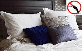 ᐅ silberfische im schlafzimmer bett bekämpfen tipps