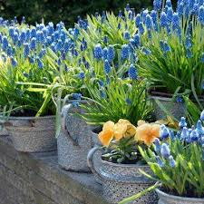 6 perennial flower bulbs garden plants flowers the home