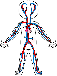 Coloring Download Circulatory System Page Free Printable Worksheets For Kids Human Sheets