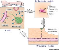 A Translational Innovation Forum Ppt 3d Biomimetic Cultures The Platform For Cell Biology Trends