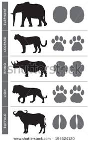 Africas Big Five Animal Tracks Elephant Lion Leopard Buffalo And Rhino
