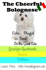 What Dogs Dont Shed Too Much by Fluffy Small Breed Dogs