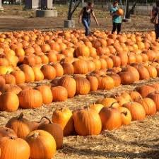 Pumpkin Patches In Bakersfield Ca by Nancy U0027s Ranch Scv U0027s Local Ranch For Family Traditions