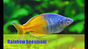 Best Fish For Aquascape 2017 [New] - YouTube Adrie Baumann And Aquascaping Aqua Rebell Natural Httpwwwokeanosgrombgwpcoentuploads2012 Amazoncom Aquarium Plant Glass Pot Fish Tank Aquascape Everything About The Incredible Undwater Art Outstanding Saltwater Designs Photo Ideas Anubias Nana Petite Planted Freshwater Beautify Your Home With Unique For Large Fish Monstfishkeeperscom Scape Nature Stock 665323012