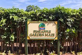 sending postcards Hawaiian Pineapple Maze