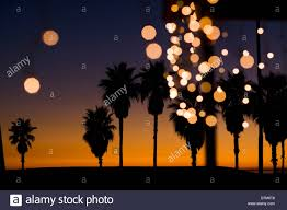 Palm Trees At Sunset With Christmas Lights Venice Beach Los Angeles County California United States Of America
