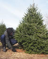 Christmas Tree Shop Deptford Nj Application by Farms Help Those Pining For Live Christmas Trees Nj Com