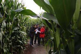 Kent Farms Pumpkin Patch by Halloween Events Where To Find Haunted Houses Corn Mazes And