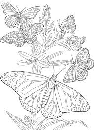 Six Butterfly Adult Coloring Pages