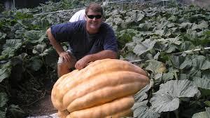 Worlds Heaviest Pumpkin Pie by World Record Pumpkin Pie Eating Contest Youtube