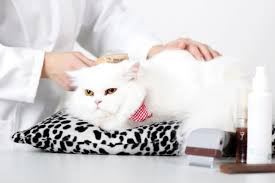 mobile cat grooming mobile cat grooming great for your cat and for you enlighten me