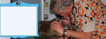lombard animal hospital lombard animal clinic veterinary hospital animal hospital