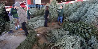 Canaan Fir Christmas Tree Needle Retention by 10 Things To Know Before Christmas Tree Shopping