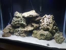 I Have 29 Lbs Of Rock And No Idea How To Aquascape! How's It ... Aquascape Designs Surripuinet Aquascaping Live Rocks In Your Saltwater Aquarium Columns A Saltwater Tank Callorecom Need Ideas General Rfkeeping Discussion Week 3 Aquascaping 120 Gal Rimless Update Youtube 55g Vertical Tank Ideas Saltwaterfish Forum Aquascape With Rocks Google Search Aquariums Pinterest Bring Back The Wall Rock News Reef Builders Walls For Building Tiger Fish Aquascapinglive Rock Help Tcmas Forums