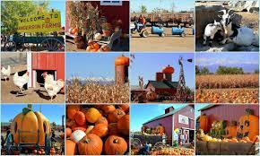 Pumpkin Picking Nj Near Staten Island by Mille Fiori Favoriti Pumpkin Picking At Anderson Farms In Erie