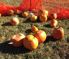 Larkspur Pumpkin Patch by The Great Pumpkin Haul Race Wrecking Routine