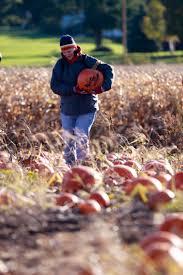 Free Pumpkin Farms In Wisconsin by Waldvogel U0027s Farm