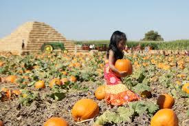 Carmichaels Pumpkin Patch Oklahoma by Pumpkin Patch Bixby Directions Credit
