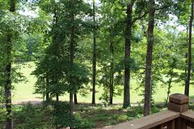 Pickwick Cabin Rentals Seventh Heaven Counce TN Cabins and