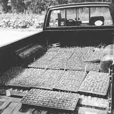 100 Seedling Truck The Scoop On How We Growfor 9122015 Broadfork Farm