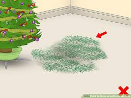 Xmas Tree Waterer by How To Care For A Christmas Tree 12 Steps With Pictures