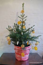 Homemade Automatic Christmas Tree Waterer by Live Growing Potted Christmas Trees From Wheeler Street