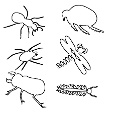 Insect Coloring Pages 9