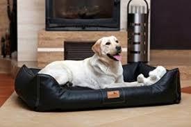 wo sollte das hundebett stehen der richtige schlafplatz