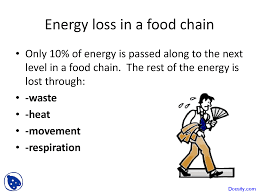 Energy Loss In Food Chain, Ecology - Biology - Lecture Slides ... Attracting Barn Owls Natural Rodent Control Gardening Energy Transfer And The Carbon Cycle Worksheet Edplace Tritec Science Learning Community Projects Organisms Roles Loss In Food Chain Ecology Biology Lecture Slides Outreach Materials Owl Original Mixed Media Pating 6x8 Inches Bird Wild Decomposers Worksheets For Kids Archbold Biological Station 14 Images Of Wetland Coloring Pages Diagram 037_13d0568f9211773be9a9d4d89c530b2png