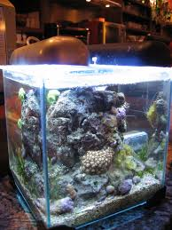 aquarium nano eau de mer bac nano eau de mer