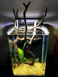 Halloween Hermit Crab Reef Safe by 5 Gallon Stocking Ideas Invertebrate Forum Nano Reef Com