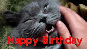 funny cat happy birthday