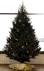 Fraser Christmas Tree Care by Order Christmas Tree Online