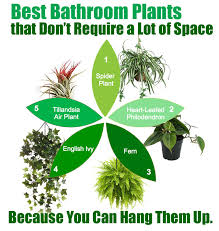 Best Plant For Windowless Bathroom by Best Plants For Bathroom Decor And My Favorite