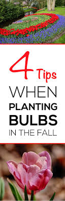 4 tips when planting bulbs in the fall garden lovin