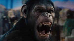 Why Aren't The Apes In
