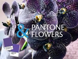 Finnflor Delivered Flowers To Finland