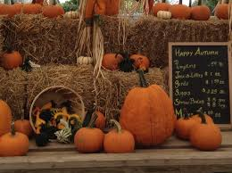 Local Pumpkin Farms In Nj by 15 Farms Near Warren To Visit For Pumpkins Hayrides U0026 More