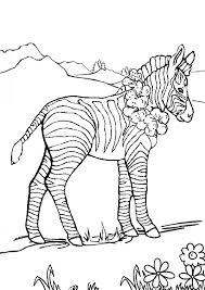 Zebra Coloring Pages In Meadow