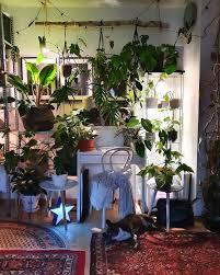 der dschungel bei nacht pflanzen wohnzimmer sch