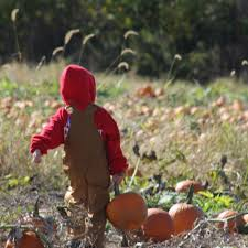 Best Pumpkin Patch Indianapolis by Dull U0027s Tree Farm U0026 Pumpkin Patch In Thorntown Indiana