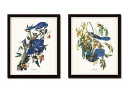 Audubon Birds Print Set No 16 Blue Jay Botanical Prints Illustration