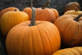 Pumpkin Seed Oil Dht Topical by Medical Trial Proves Pumpkin Seed Oil Is An Effective Hair Loss