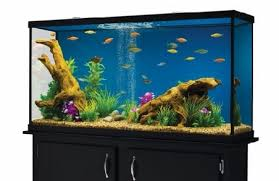 best 55 60 gallon fish tank with stand and aquarium kit for sale
