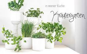 ich habe einen kräutergarten mitten in meiner küche