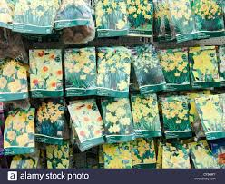 packaged daffodil and narcissus flower bulbs for sale in autumn in