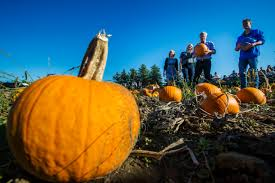 Albuquerque Pumpkin Patch 2015 by Mark Blinch Photography Blog Page 2 Of 22 A Photo Blog To
