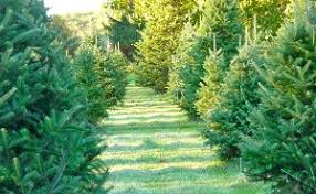 Christmas Tree Farm Lincoln Nebraska by Northeast New Jersey Christmas Tree Farms Choose And Cut